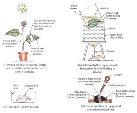 mode  nutrition  plants