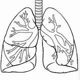 Human Lungs Science Printable Template Kindergarten Okuloencesi Etkinlikleri Corpul Yeşilay Haftası Systems Uman Coloring Anatomy Worksheets Drawing Projects Desene Templates sketch template