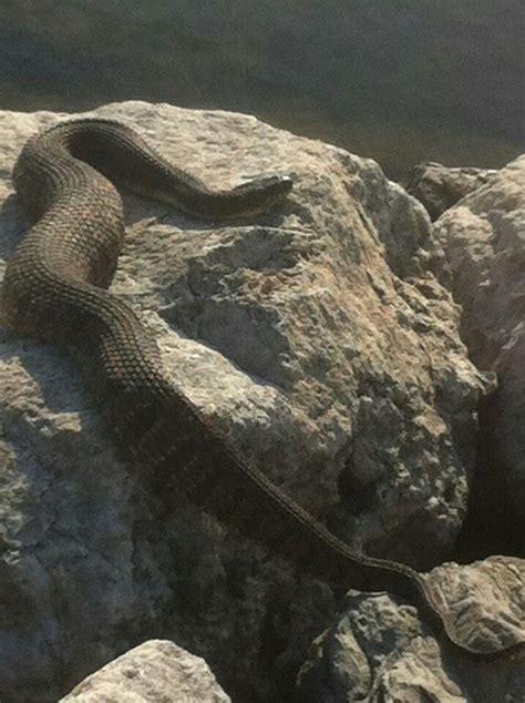 Lake texoma snake...was fishing close to | Nature around ...