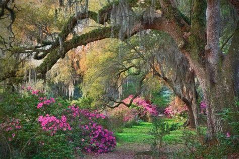 Garden South Style by Azaleas Moss Magnolia Plantation Sc I Worked