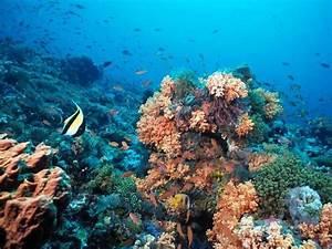 Fond Ecran Mer : fond ecran ocean mer ~ Farleysfitness.com Idées de Décoration