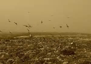 Твердые бытовые отходы. утилизация и переработка бытовых отходов. вторичное сырье. архив выпусков за 2019 год