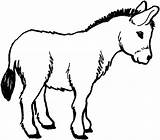 Donkey Coloring Pages Donkeys Male Drawing Drawings Sketch Line Horses Tack Colouring Horse Sheets Crafts Animals Mules Printable Getdrawings Foal sketch template