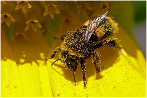 Do you have a Seasonal Allergy? Hay Fever, Rhinitis, Pollen