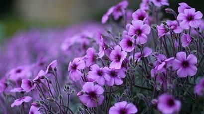 Laptop Flowers Purple Pc Plants Desktop 1080