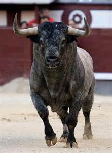 Charging Bull Animal