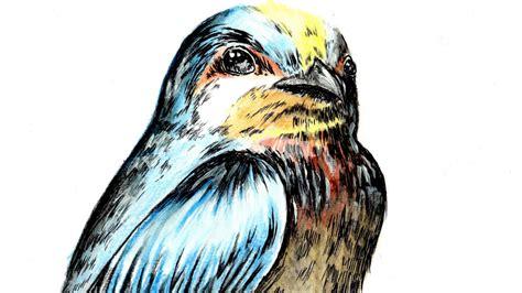 draw animal bird  disegnare  uccello