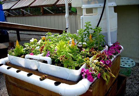 aquaponics  gardening system  fish  circulating