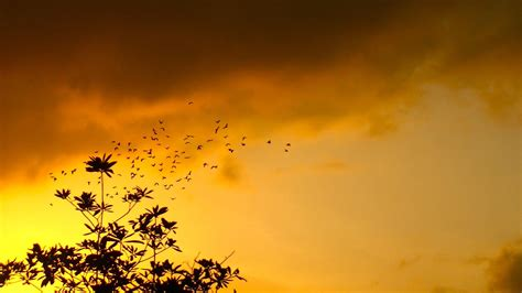 Beautiful Nature Background by Beautiful Nature Sunset And Birds Figure Background Hd