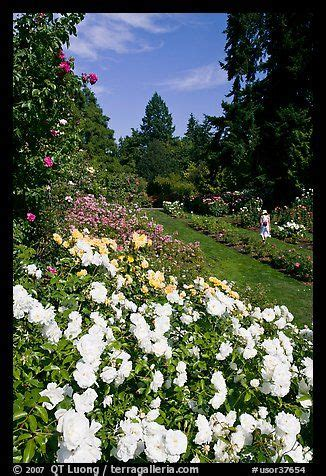 68 best oregon flower gardens images on flower