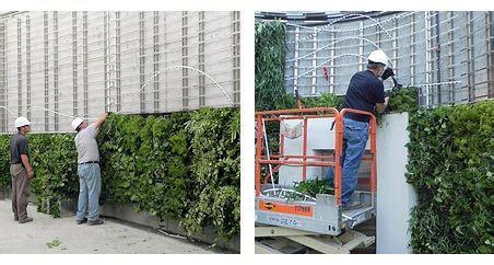 Vertical Garden Construction by Green Wall Construction Living Wall Construction