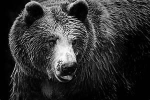 Tableau Photo Noir Et Blanc : tableau noir et blanc ours izoa ~ Melissatoandfro.com Idées de Décoration