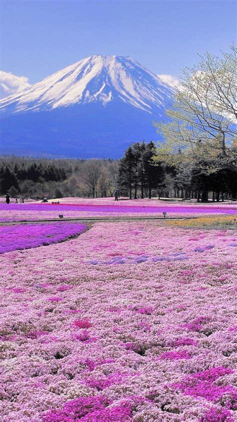 mt fuji japan scenery wallpaper  desktop