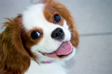 Companion Animal Psychology Make Your Dog Happy Enrichment