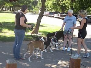 Training a dog agility dog training obedience dog for Dog training los angeles