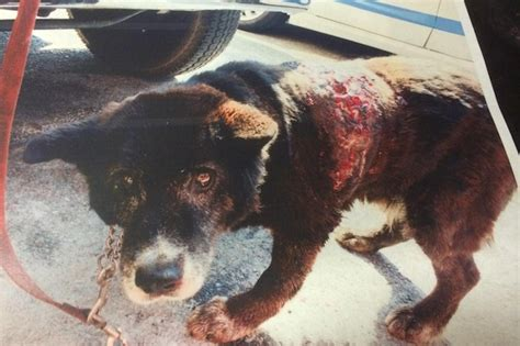 dog euthanized til homeless aspca him reporter telling told killed found without he