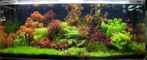 Aquascapes Aquarium by Aquascape Aquarium Tutorial A Step By Step Guide For