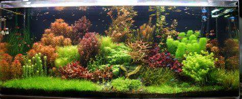Aquascape Plant by Aquascape Aquarium Tutorial A Step By Step Guide For