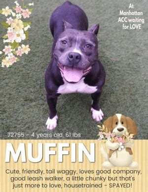 manhattan acc waiting  love   years   lbs