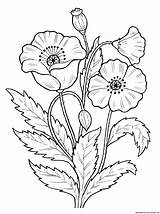 Poppy Coloring Flowers Pages sketch template