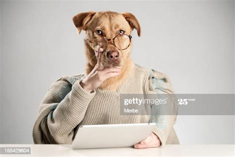 Dog Thinking About Something High-Res Stock Photo - Getty ...