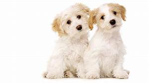 introducing a new puppy to your older dog part 1 With how to introduce a puppy to an older dog