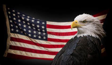 1,380 American Eagle Flag Photos - Free & Royalty-Free ...