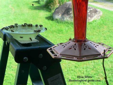 how to keep wasps away from hummingbird feeders hummingbird feeder bees how to solve the problem