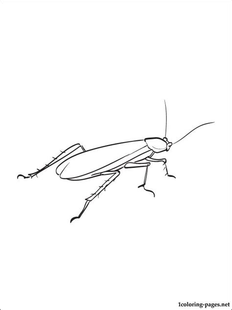 cockroach coloring drawing coloring pages