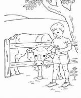 Coloring Pages Boys Sheets Cow Boy Farm Feeding Printable Activity Young Animal Activities Colouring Cows Popular Adult Fun Embroidery Hand sketch template