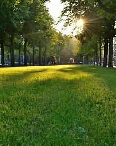 Rasen Düngen Bei Sonne : kostenlose foto baum gras licht struktur sonne feld rasen wiese sonnenlicht morgen ~ Indierocktalk.com Haus und Dekorationen