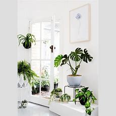 Best 25+ Indoor Tropical Plants Ideas On Pinterest