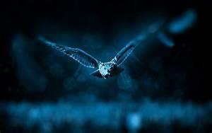 Night Owl HD Desktop Wallpapers