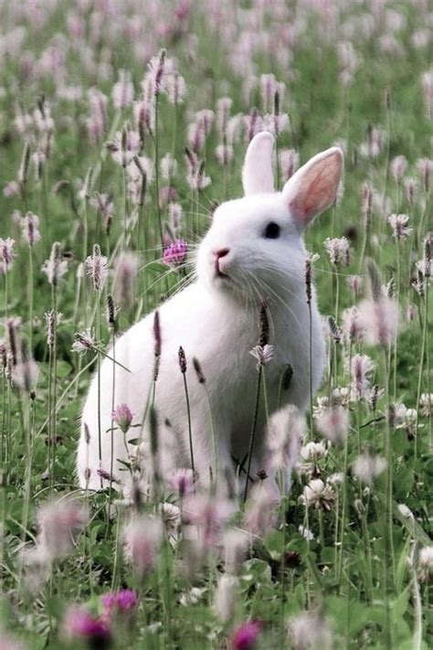 cute bunny   meadow pictures   images