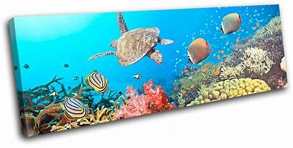 Sea Turtle Animals Canvas Fish Wall Sg31