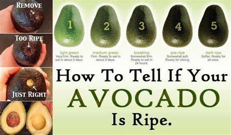 how to ripen avocados avocado chefmarilu