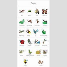 Bugs In English!  English Vocabulary  English, Learn English, Teaching English