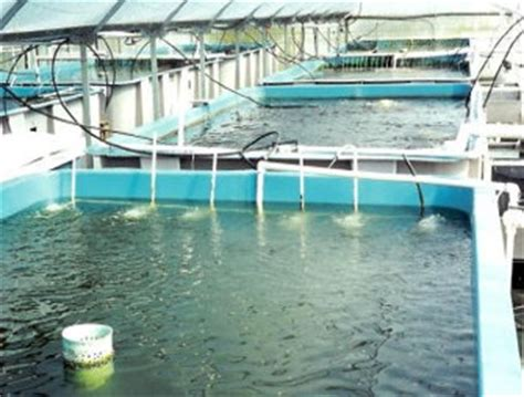 fish farming aquacultur