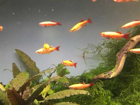 fische kleines aquarium nano aquarium fische kleine fische f 252 r dein becken