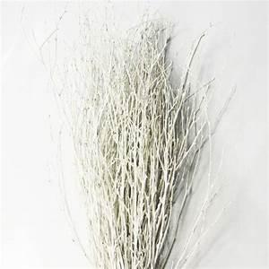 Branche De Bouleau : botte de 50 branches de bouleau color esblanc deco ~ Melissatoandfro.com Idées de Décoration