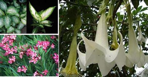 jenis jenis tanaman beracun  menawan tips