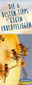 Fruchtfliegen Im Bad : 36 besten haushalt putzen bilder auf pinterest ~ Lizthompson.info Haus und Dekorationen