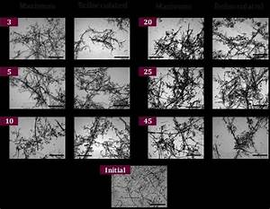 Optical Microscope Images Of Rp Flocs At 5x Magnification
