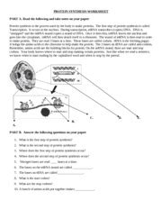 protein synthesis worksheet codons your knows where