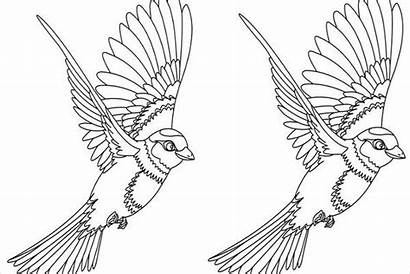 Bird Coloring Pages Flying Birds Colouring Template
