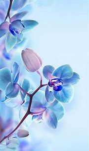 Free download 3D Flower HD Wallpapers For Mobile Best HD ...
