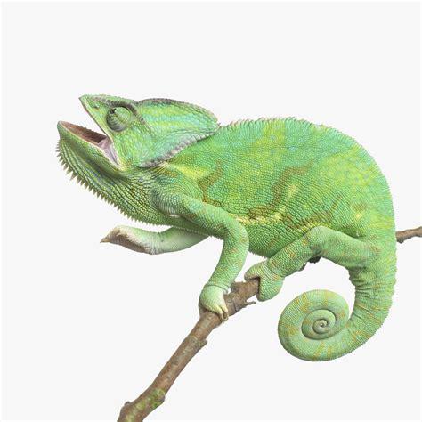 types of chameleons types of chameleons choosing a pet chameleon