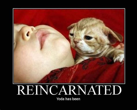 Chris Farley Reincarnation Meme - 5 funny caption pictures voices in my head