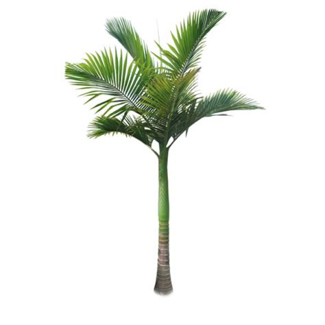 palm tree l alexander palm tree alexander palm tree plants and palms florida coconuts store