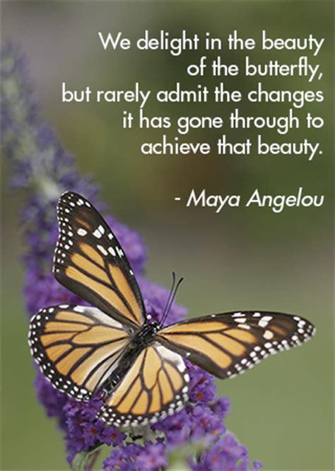 healing butterfly garden brings beauty  education